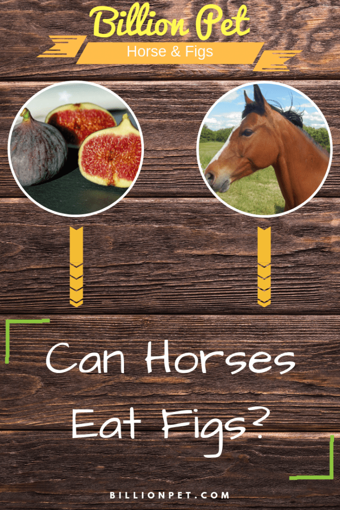 can horses eat figs? you will be surprised - Known Pets