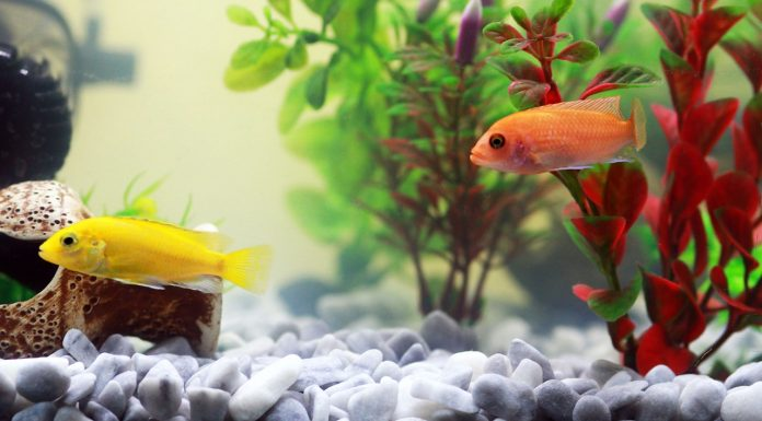 Freshwater Fish - Known Pets
